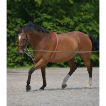 LUNGING-AID
